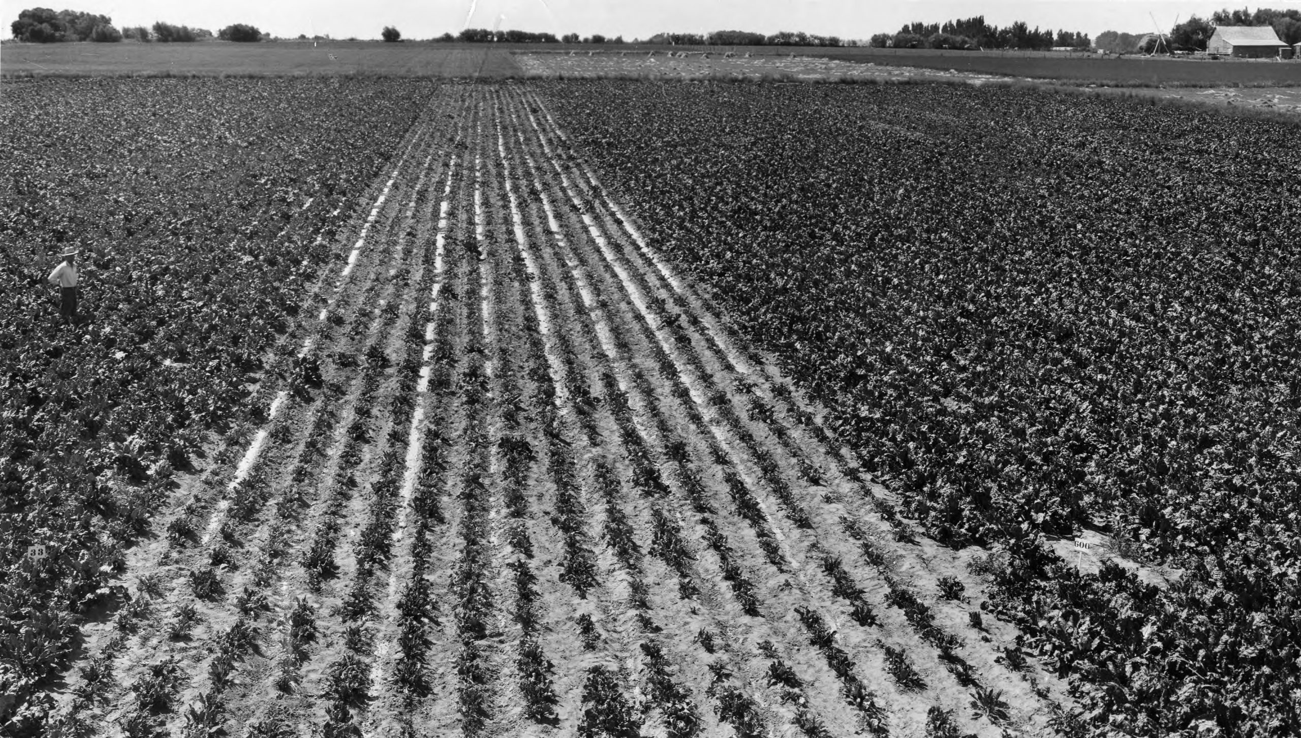 """Featured image for """"Sugar Beets and Religion: Q&A with Matthew C. Godfrey"""""""